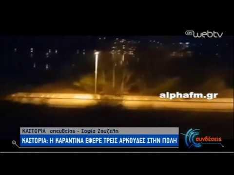 Αρκουδάκια κατέβηκαν στην «καρδιά» της Καστοριάς! | 08/04/2020 | ΕΡΤ