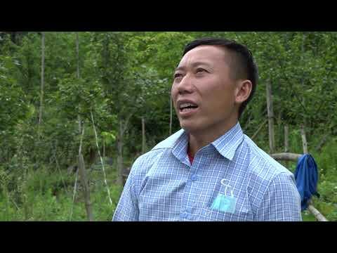 Nông dân Si Ma Cai thi đua lao động, sản xuất