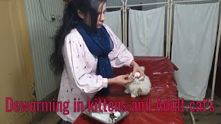 Deworming in kittens and  adult cat's/ Pet care / Symptoms of cats worms /Drhirasaeed