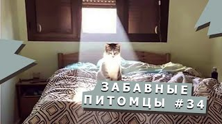 Подборка видео с милыми животными #34 Cute animals video