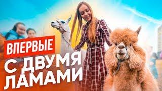 ВПЕРВЫЕ: ЗАВЕЛА АЛЬПАКУ И ЛАМУ// 24 часа с новыми питомцами!
