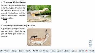 Eğitim Vadisi AYT Biyoloji 8.Föy Ekoloji 1 Konu Anlatım Videoları