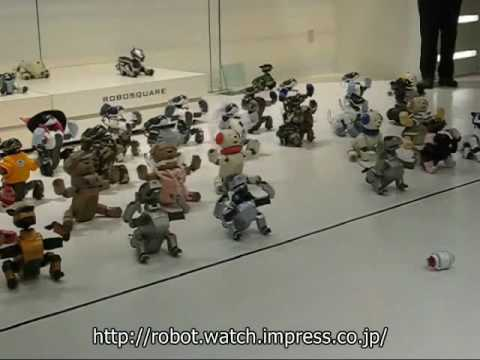 Rolly Orchestrates Aibo Chorus of Doom