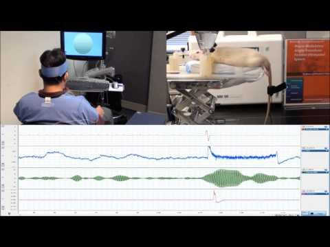 Harvard Scientists Have Just Invented Human-Rat Telepathy
