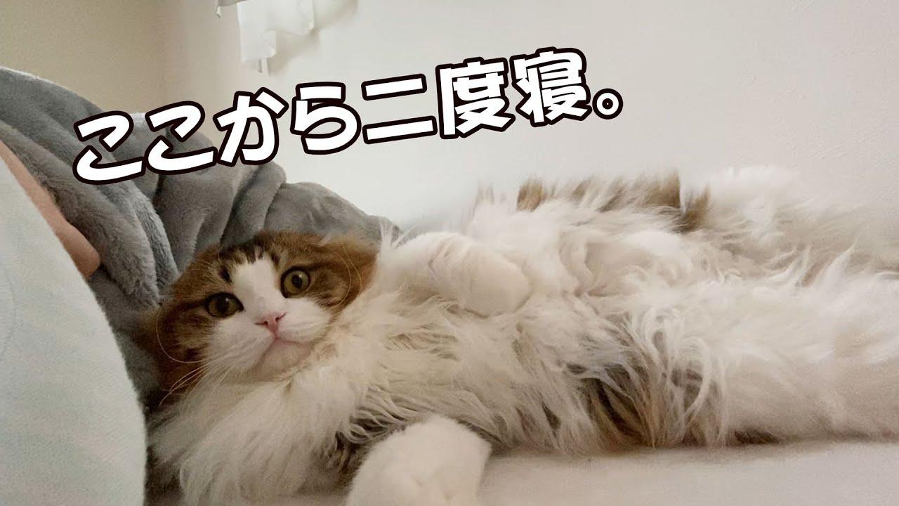 ママと二度寝をした後にお膝でなでなでされるのが最高なもふ猫が癒しです