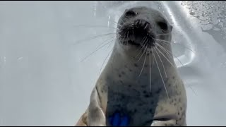 Waking Up a Seal (First internet video compilation)