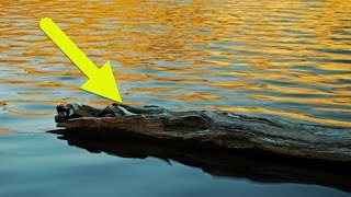 This Fisherman Spotted A  Log  In The Lake – Then Suddenly Knew It Was A Helpless Figure Drowning