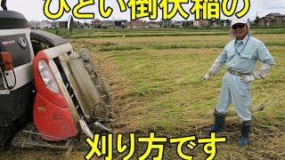 ひどい倒伏稲の刈り方です。2016