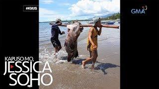 Kapuso Mo, Jessica Soho: Signos Mula Sa Mga Namataang Higanteng Isda