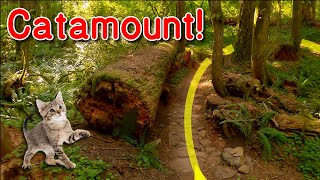 A trip down Catamount!