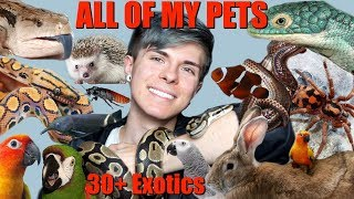 MEET ALL OF MY PETS! (Over 30 Exotic Animals) 2018 | Tyler Rugge - Video Youtube