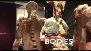 Things to do this summer at Buena Park - Bodies The Exhibition