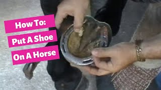 How to put a shoe on your horse by Alex Gutierrez - Dressage Hub