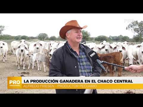 La producción ganadera en el Chaco Central