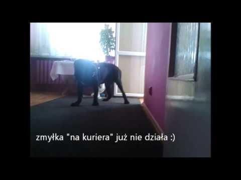 Koślawego oraz kupić w Kazaniu