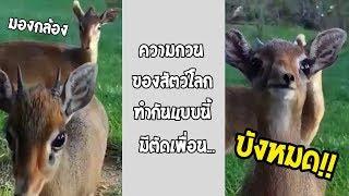 ความรู้สึกของคุณ เมื่อเพื่อนบังเวลาถ่ายรูปรวม... #รวมคลิปฮาพากย์ไทย