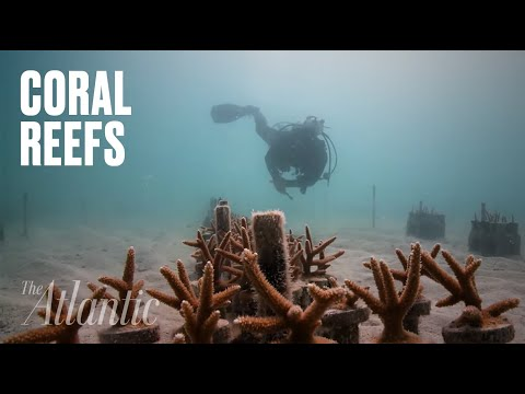[8:02] An accidental discovery shows how we can rebuild our coral reefs x40 faster.