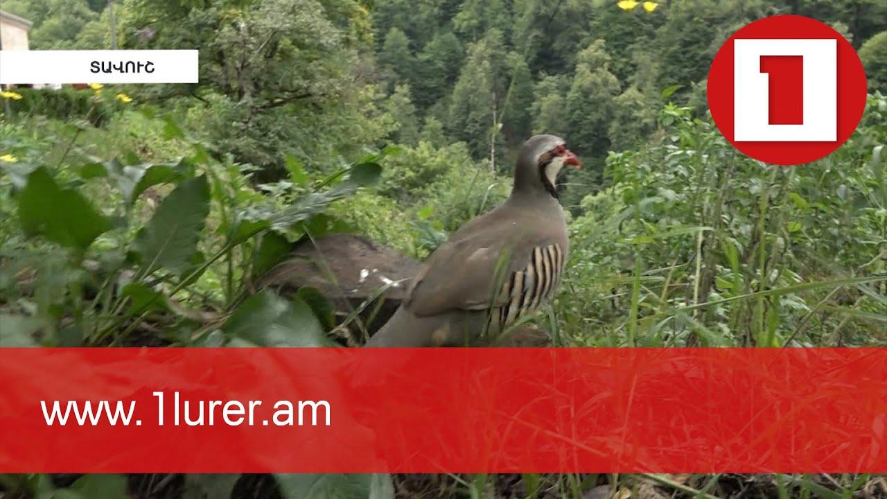 Բնությանը վայրի թռչուններ նվիրող արվեստագետների թիմն ընդլայնվել է