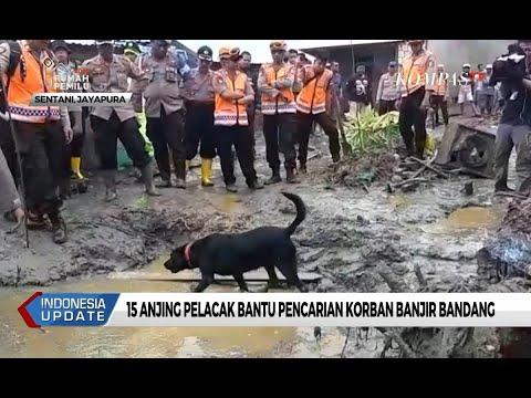 Banjir Bandang di Jayapura, 15 Anjing Pelacak Bantu Pencarian Korban