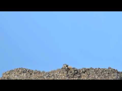 アサガオの芽生え(微速度撮影)