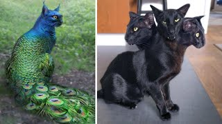 Top 10 Unusual And Abnormally Strange Cats That Actually Exist