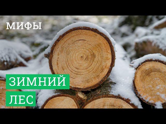 Постер для видео - Мифы про зимний лес в деревянном домостроении