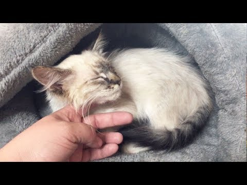 Rescuing An Emaciated Kitten