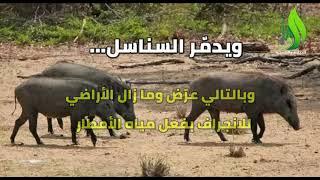 سلاح إسرائيل الموجه ضد ...