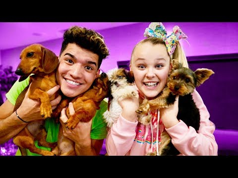 Christmas Puppy Surprise! (ft Jojo Siwa)