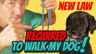 New Dog Law: Twice Daily Walks or Serious Fines