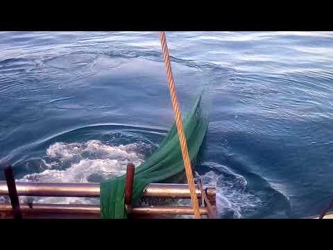 Pesca strascico MP lupo