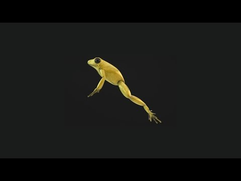 Golden Poison Frog - Demo