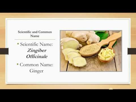 Video Ginger - Health Benefits of Ginger - Zingiber officinale - One of the Most Powerful Herbs