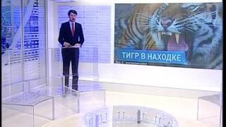 Тигр загрыз собаку в Находке
