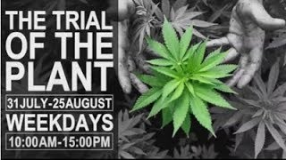 Trial Of The Plant, Day 12 - Dagga Couple - Streamed live from PTA, 17 Aug 2017.