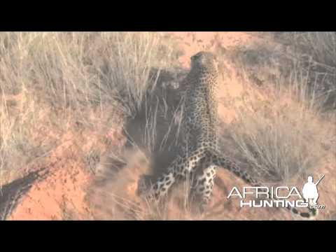The goat hunting the big 5 of africa the ill community for Big 5 fishing license