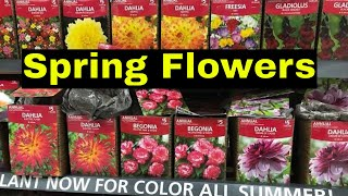 What Flowers do you plant in Spring for great Summer Colors