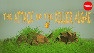 Attack of the killer algae – Eric Noel Muñoz