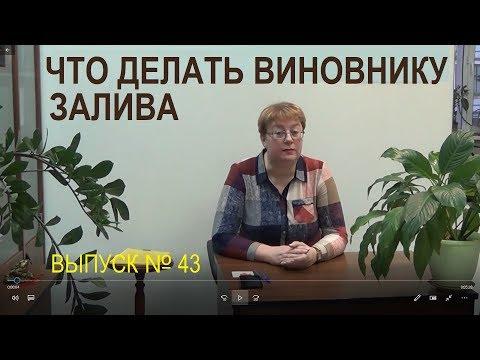 Что делать виновнику залива Выпуск №43