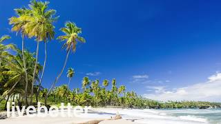 Calypso of Trinidad and Tobago Instrumental Cheerful Tropical Caribbean Beach
