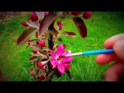 seltene Pflanzen / Blüten von Hand bestäuben..!!!