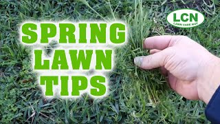 Spring Lawn Fertilizing & Weed Control Tips