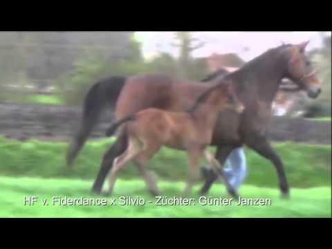 Video Vorschau von Fiderdance