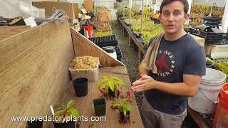 The Ultimate Nepenthes Repotting Guide
