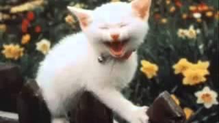 Пукание кошка