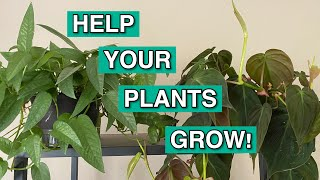 FEEDING MY PLANTS | Why You Should Fertilize Your Indoor Plants | How To Use Houseplant Fertilizer