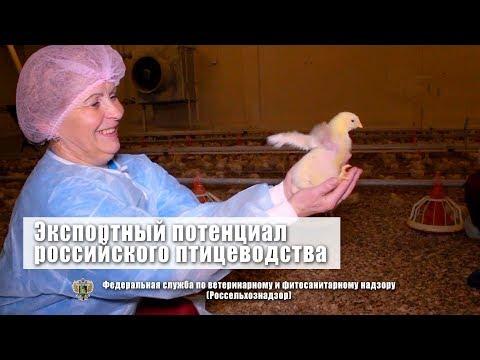 Экспортный потенциал российского птицеводства.