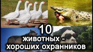 10 животных - хороших охранников