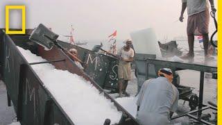 Meet the Ice Men of Mumbai's Largest Fish Market | Short Film Showcase thumbnail