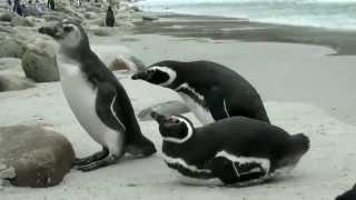 """סרטון אנטארקטיקה (יח""""ץ Ponant)"""